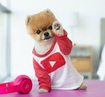 Meet the famous dog named JiffPom: Bio, Age, Wiki, Career, Net Worth, Owner